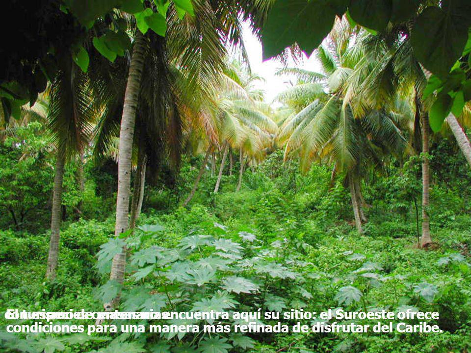 El turismo de masas no encuentra aquí su sitio: el Suroeste ofrece condiciones para una manera más refinada de disfrutar del Caribe. con especies cent