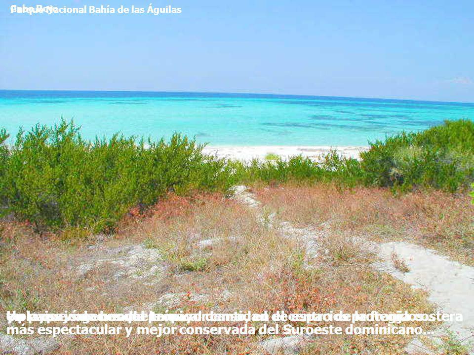 Parque Nacional Bahía de las Águilas Cabo Rojo y playas vírgenes del país...Un paisaje de bosque tropical denso, en el centro de la franja costera más