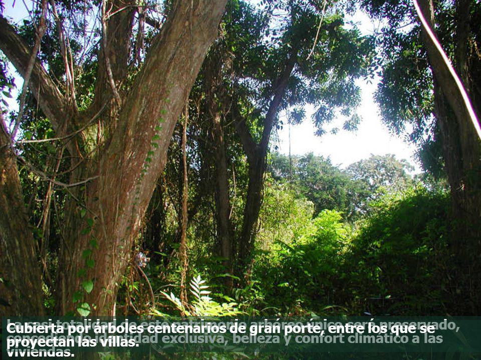 La casi totalidad de este patrimonio arbóreo único será preservado, concediendo identidad exclusiva, belleza y confort climático a las viviendas. Cubi