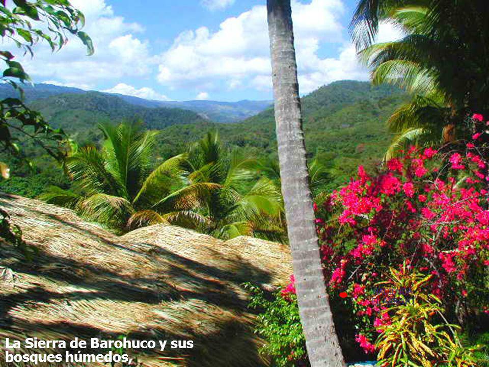 SAMANÁ …y una pluviometría similar a la de Samaná. Combinación que produce un paisaje muy exuberante: La Sierra de Barohuco y sus bosques húmedos, HAC