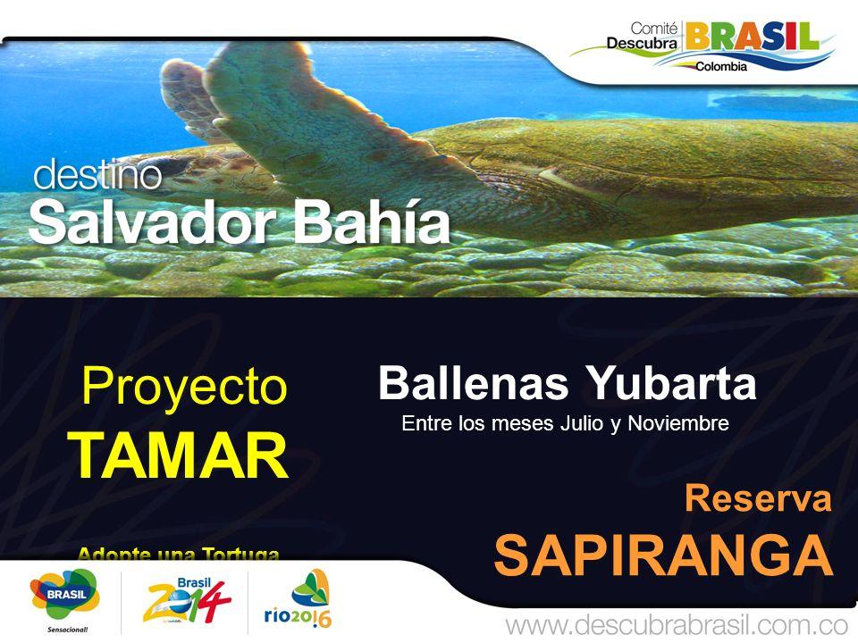 Proyecto TAMAR Adopte una Tortuga Reserva SAPIRANGA Ballenas Yubarta Entre los meses Julio y Noviembre