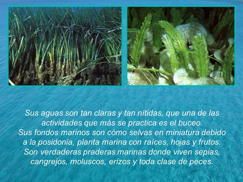 Sus aguas son tan claras y tan nítidas, que una de las actividades que más se practica es el buceo.