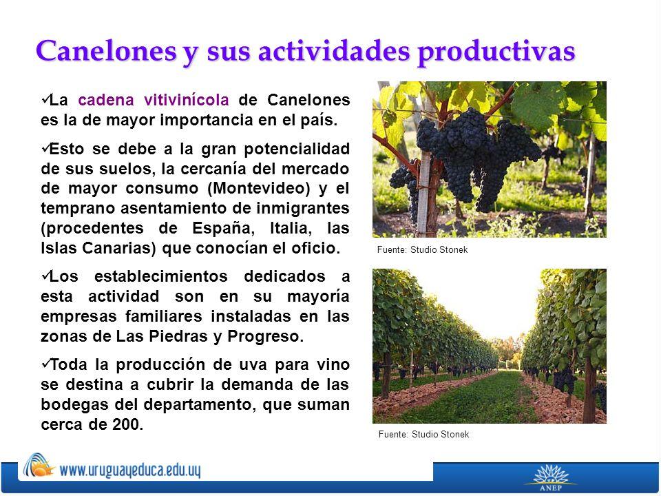 Canelones y sus actividades productivas La cadena vitivinícola de Canelones es la de mayor importancia en el país. Esto se debe a la gran potencialida