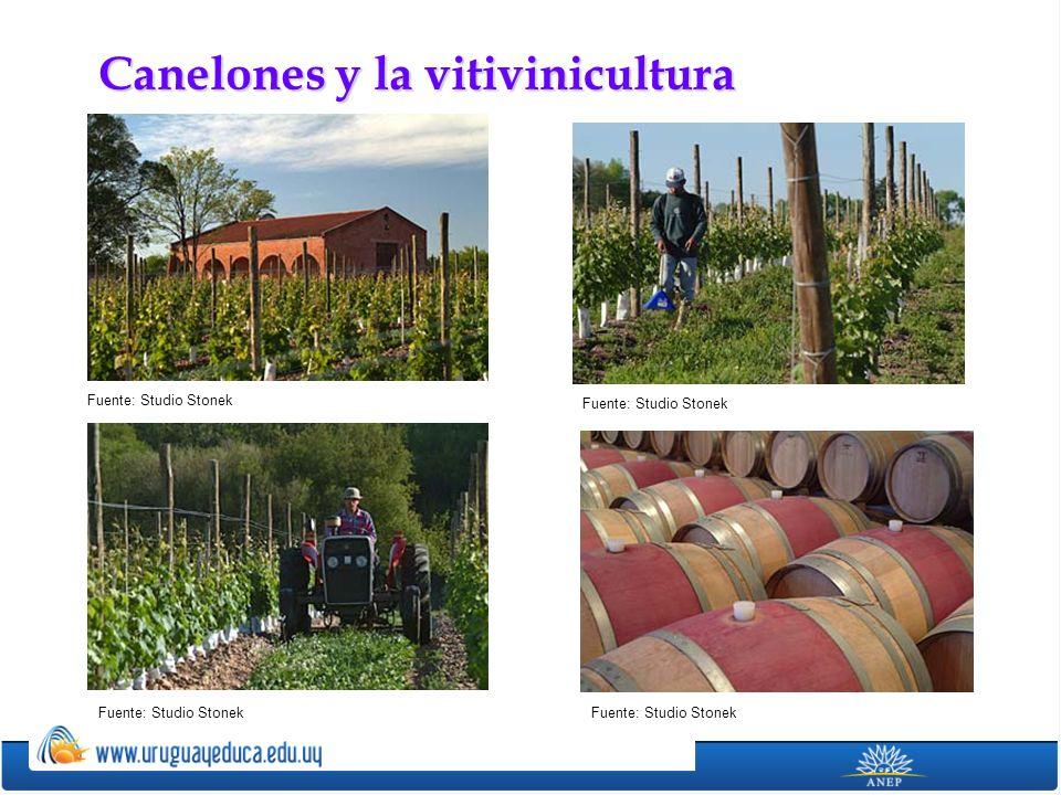 Canelones y la vitivinicultura Fuente: Studio Stonek