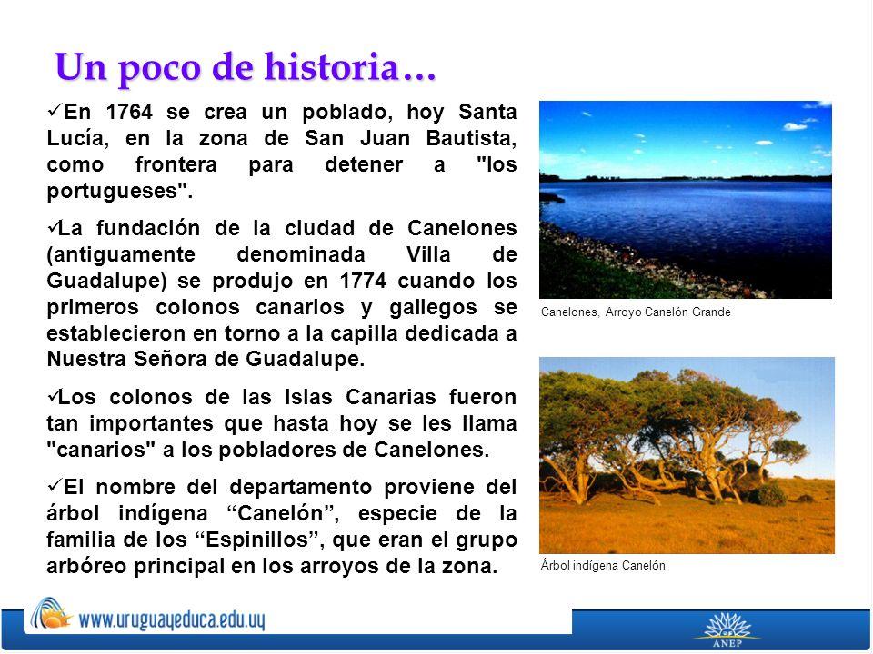 La llanura platense se extiende en casi todo el territorio, particularmente en la cuenca del río Santa Lucía.