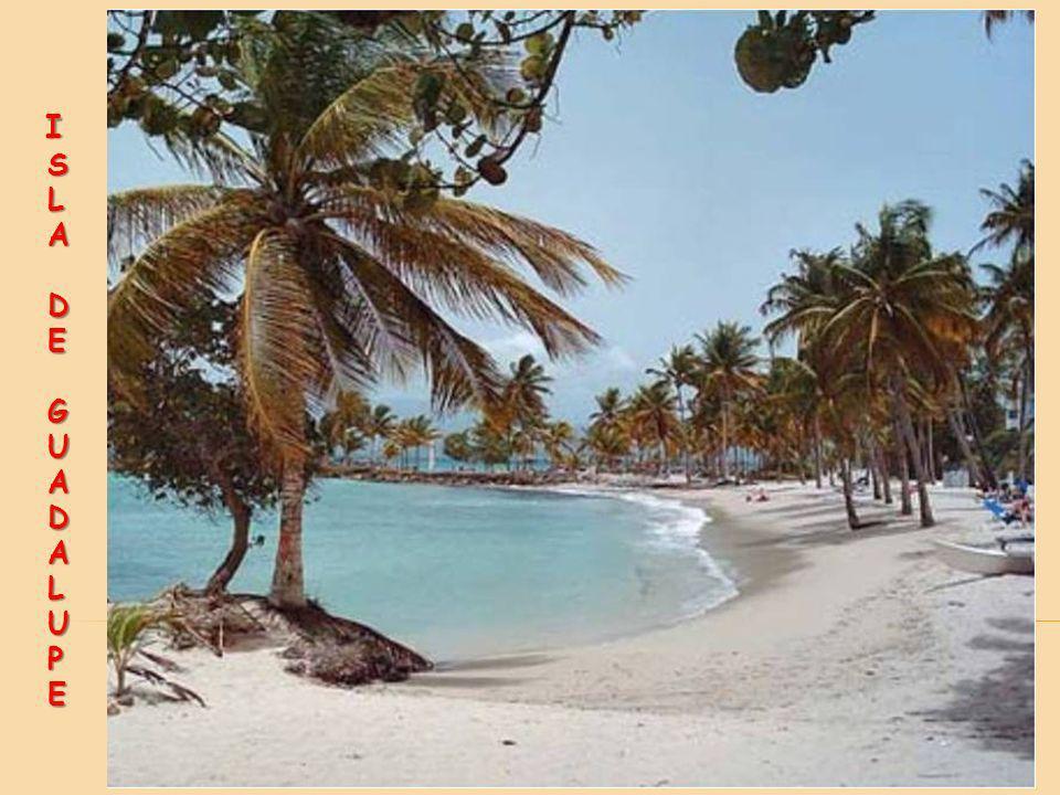 Es en la costa sur de la Grande-Terre donde se sitúa la mayoría de centros turísticos, con playas de arena blanca y arrecifes coralinos. Esta zona se