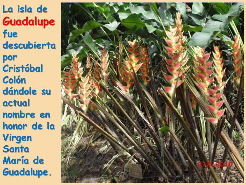 Guadalupe (Guadeloupe en francés) es un pequeño archipiélago de Las Antillas, en el Mar del Caribe. Es un departamento de ultramar de Francia.
