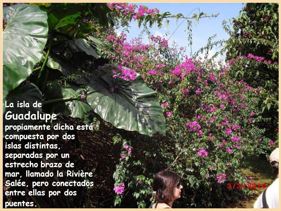 La isla de Guadalupe fue descubierta por Cristóbal Colón dándole su actual nombre en honor de la Virgen Santa María de Guadalupe.