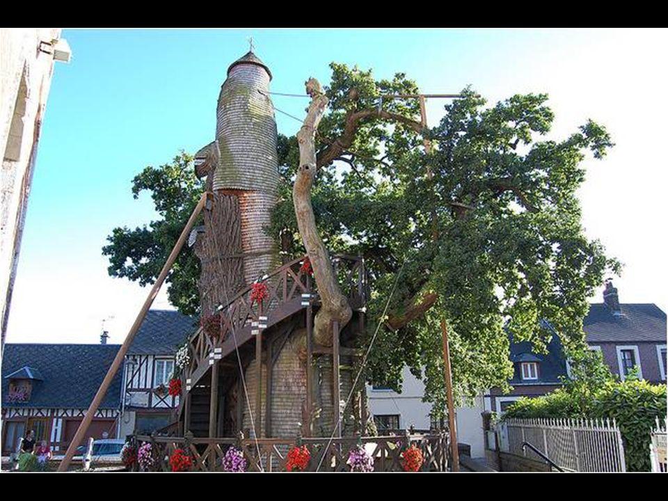 Dicho árbol, tiene más de 1.200 años y cuenta con 15 metros de circunferencia en la base y 18 metros de alto.