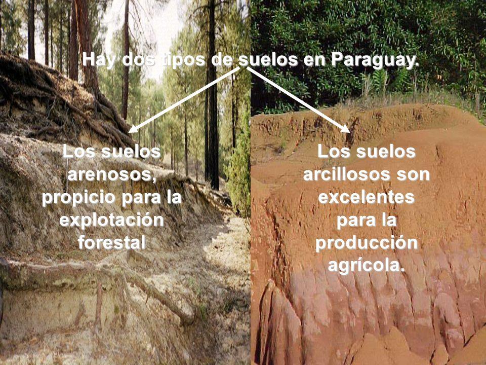 Hay dos tipos de suelos en Paraguay.