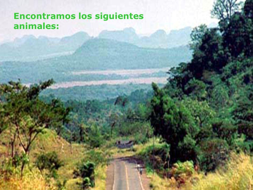 A la ida pasamos por el cerro de Sarambí.