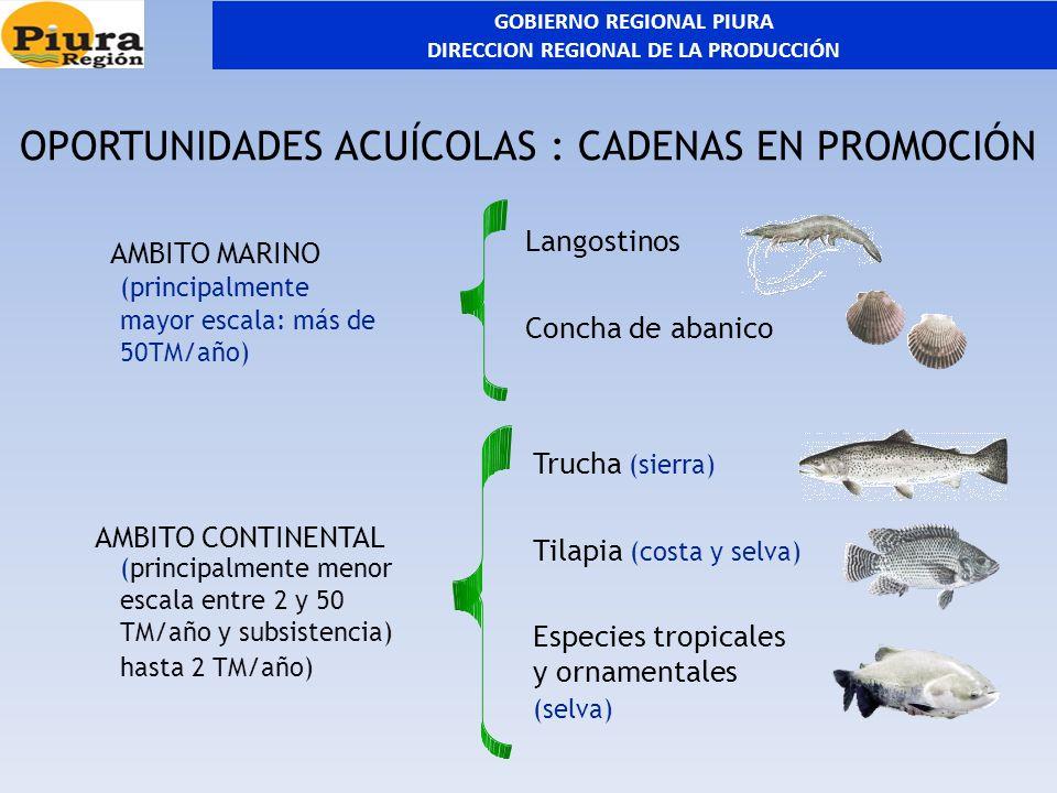 OPORTUNIDADES ACUÍCOLAS : CADENAS EN PROMOCIÓN Langostinos Concha de abanico Trucha (sierra) Tilapia (costa y selva) Especies tropicales y ornamentale