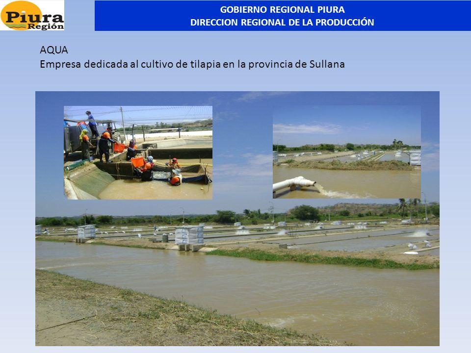 AQUA Empresa dedicada al cultivo de tilapia en la provincia de Sullana GOBIERNO REGIONAL PIURA DIRECCION REGIONAL DE LA PRODUCCIÓN