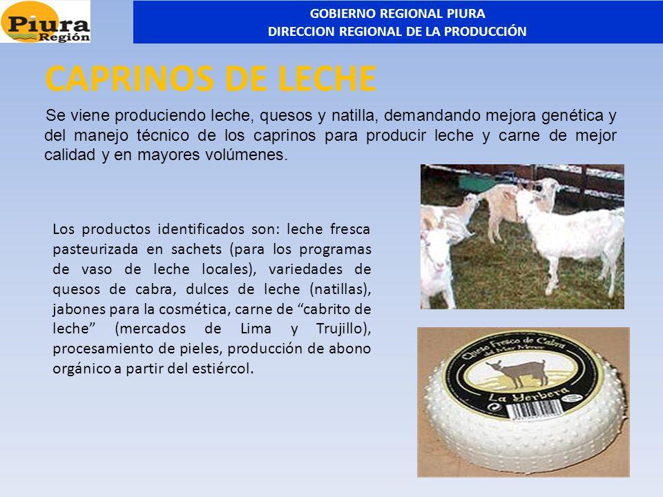 CAPRINOS DE LECHE Se viene produciendo leche, quesos y natilla, demandando mejora genética y del manejo técnico de los caprinos para producir leche y