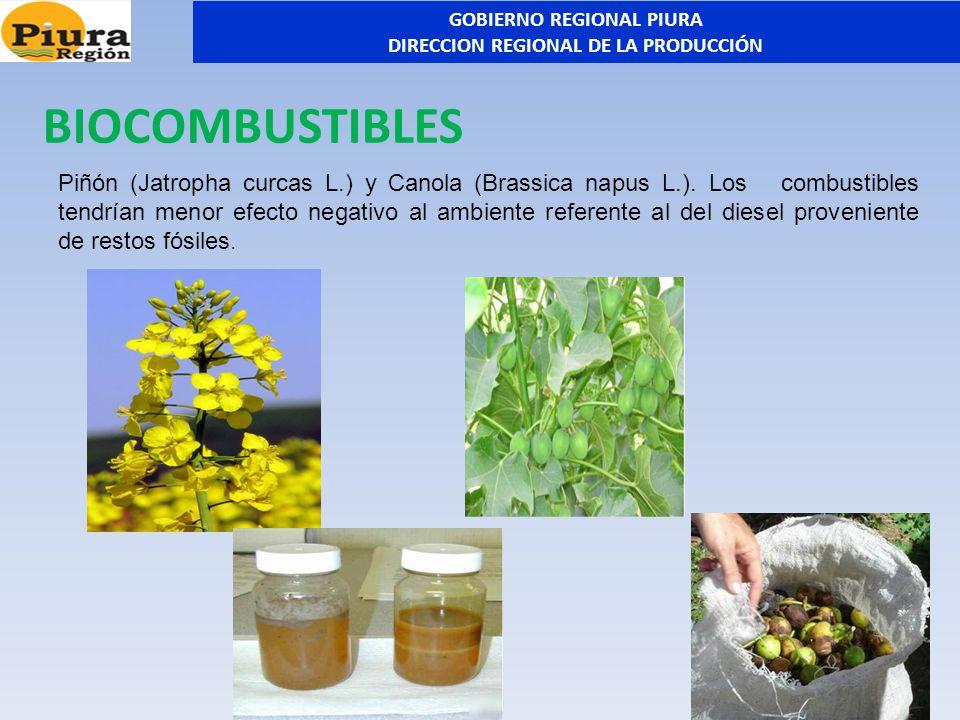 Piñón (Jatropha curcas L.) y Canola (Brassica napus L.). Los combustibles tendrían menor efecto negativo al ambiente referente al del diesel provenien