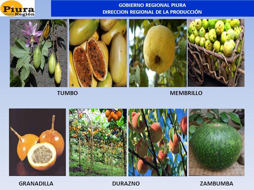 MEMBRILLOTUMBO GRANADILLADURAZNO ZAMBUMBA GOBIERNO REGIONAL PIURA DIRECCION REGIONAL DE LA PRODUCCIÓN