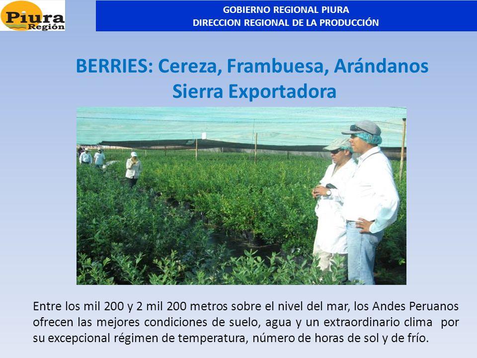 BERRIES: Cereza, Frambuesa, Arándanos Sierra Exportadora Entre los mil 200 y 2 mil 200 metros sobre el nivel del mar, los Andes Peruanos ofrecen las m
