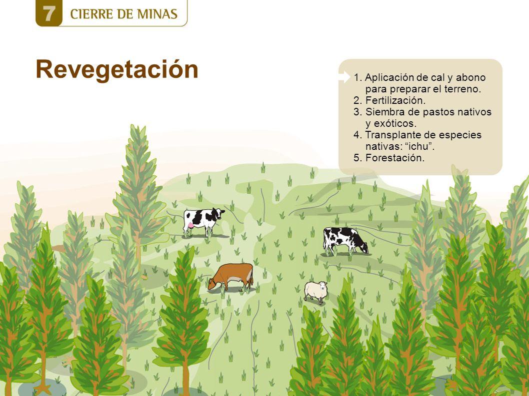 Revegetación 1. Aplicación de cal y abono para preparar el terreno. 2. Fertilización. 3. Siembra de pastos nativos y exóticos. 4. Transplante de espec