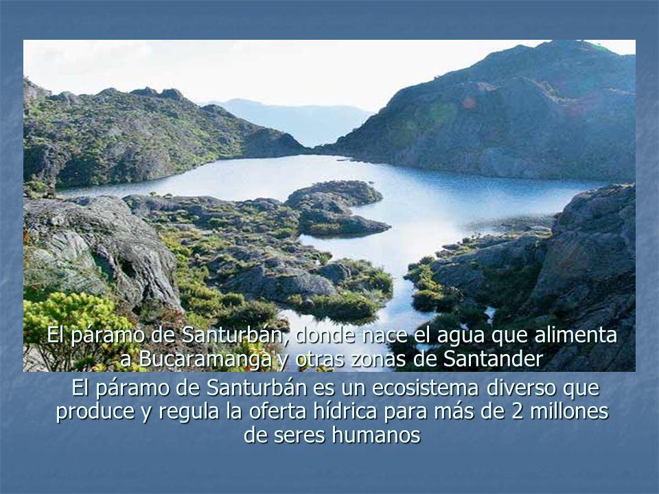 El páramo de Santurbán, donde nace el agua que alimenta a Bucaramanga y otras zonas de Santander El páramo de Santurbán es un ecosistema diverso que p