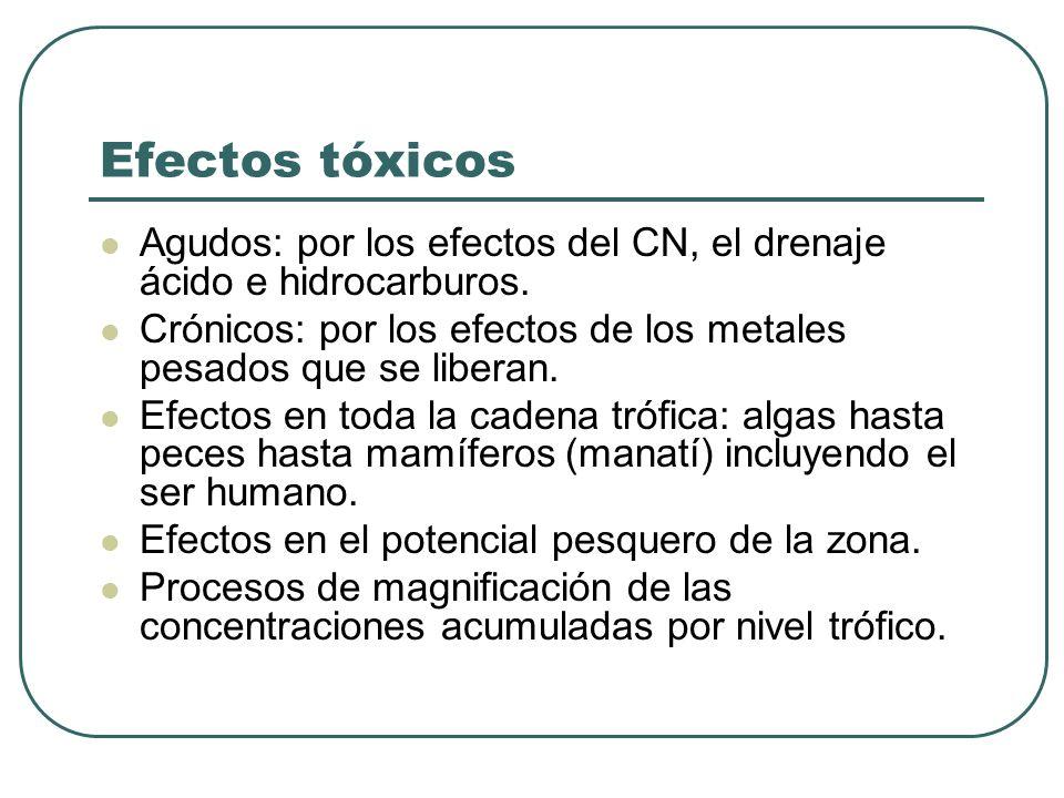 Efectos tóxicos Agudos: por los efectos del CN, el drenaje ácido e hidrocarburos. Crónicos: por los efectos de los metales pesados que se liberan. Efe
