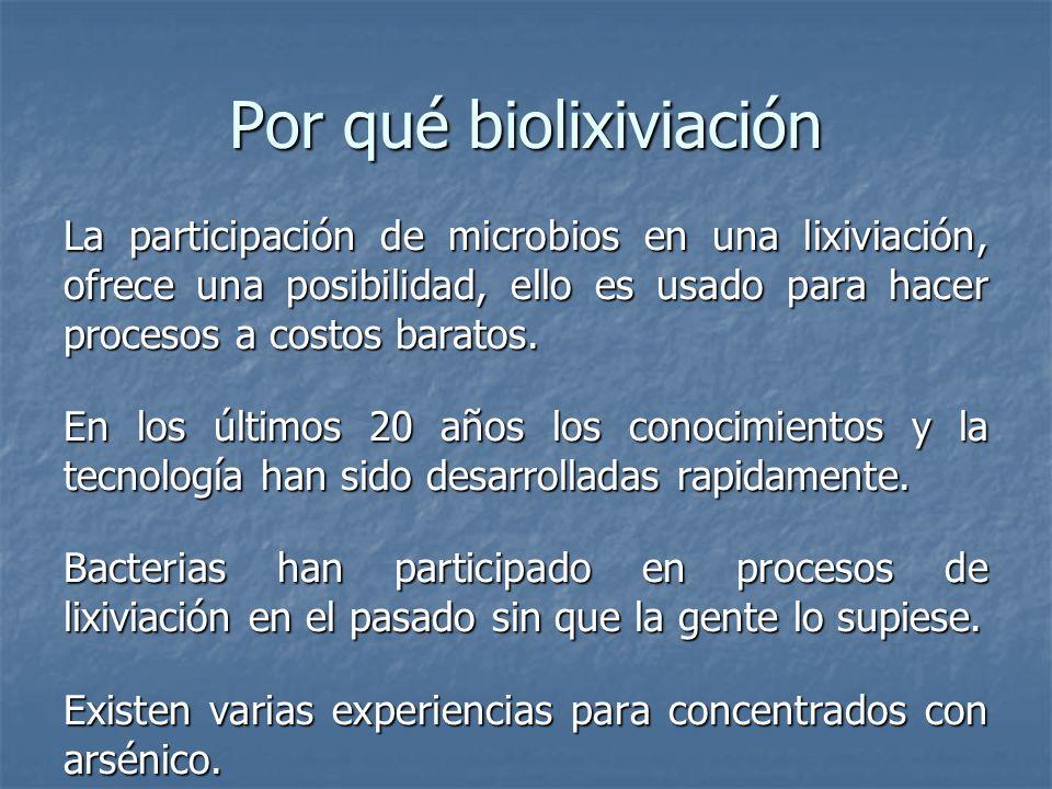 Por qué biolixiviación La participación de microbios en una lixiviación, ofrece una posibilidad, ello es usado para hacer procesos a costos baratos.