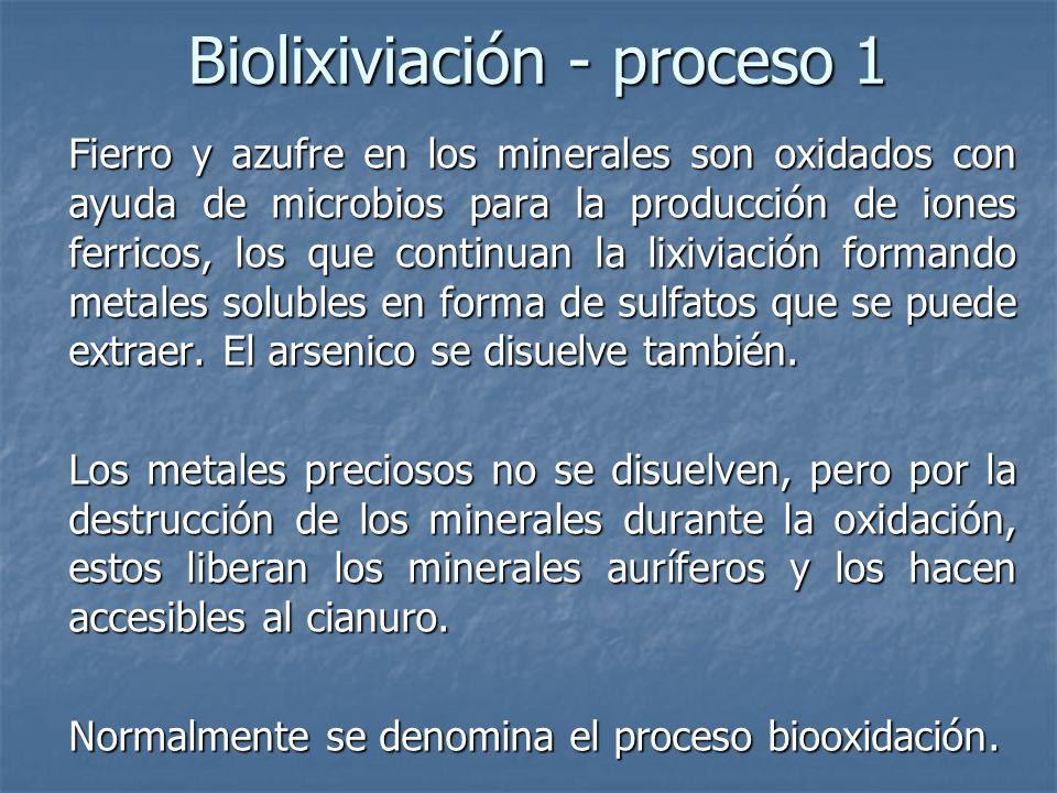 Biolixiviación - proceso 1 Fierro y azufre en los minerales son oxidados con ayuda de microbios para la producción de iones ferricos, los que continuan la lixiviación formando metales solubles en forma de sulfatos que se puede extraer.