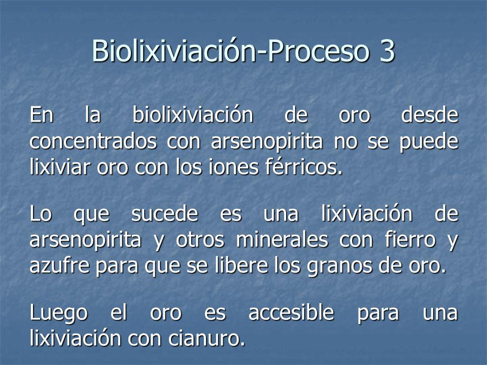 Biolixiviación-Proceso 3 En la biolixiviación de oro desde concentrados con arsenopirita no se puede lixiviar oro con los iones férricos. Lo que suced