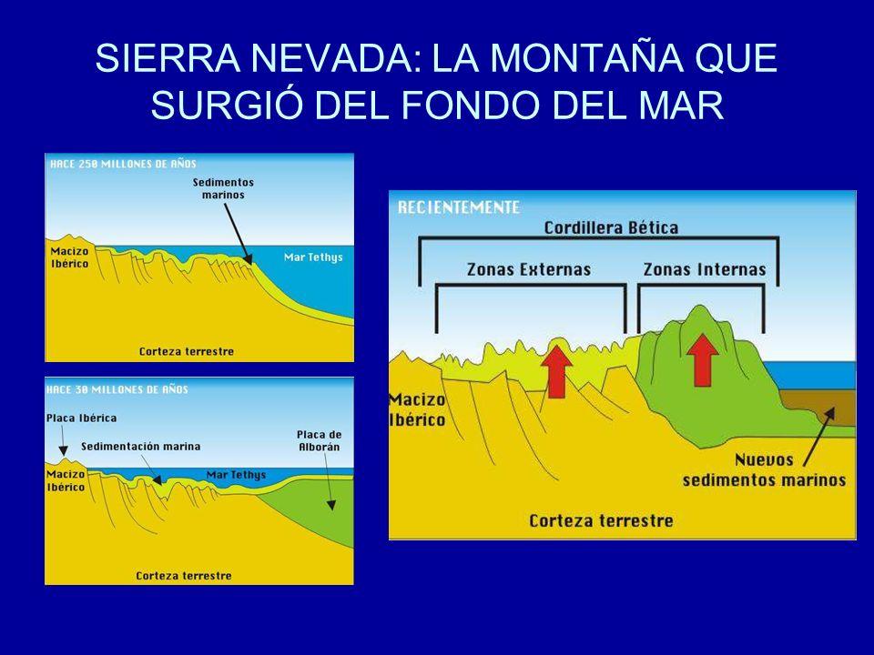SIERRA NEVADA: LA MONTAÑA QUE SURGIÓ DEL FONDO DEL MAR
