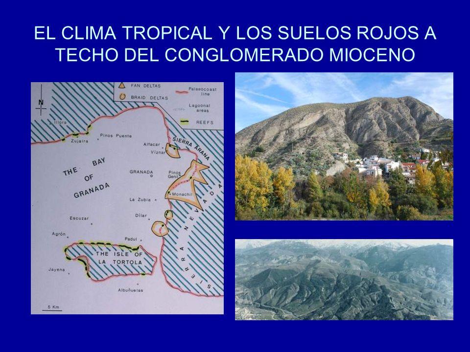 EL CLIMA TROPICAL Y LOS SUELOS ROJOS A TECHO DEL CONGLOMERADO MIOCENO