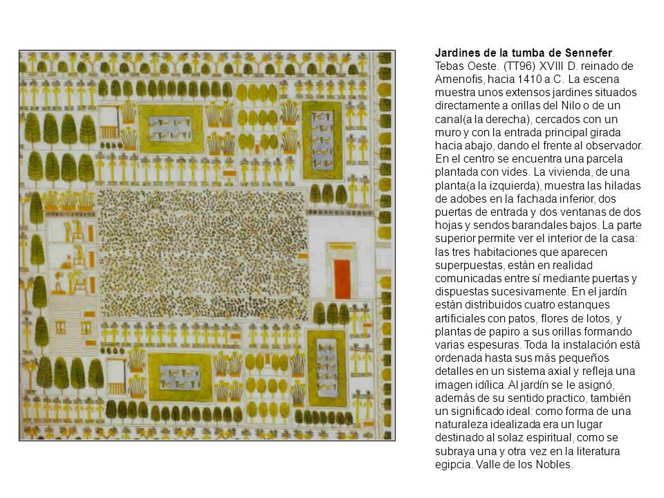 Jardines de la tumba de Sennefer.Tebas Oeste. (TT96) XVIII D.
