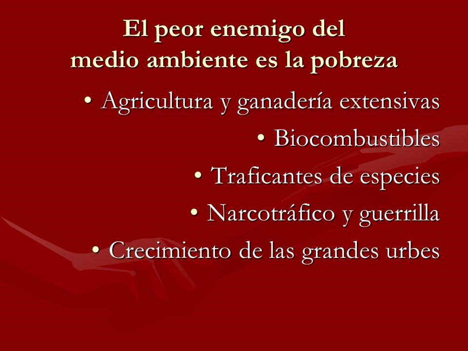 El peor enemigo del medio ambiente es la pobreza Agricultura y ganadería extensivasAgricultura y ganadería extensivas BiocombustiblesBiocombustibles T