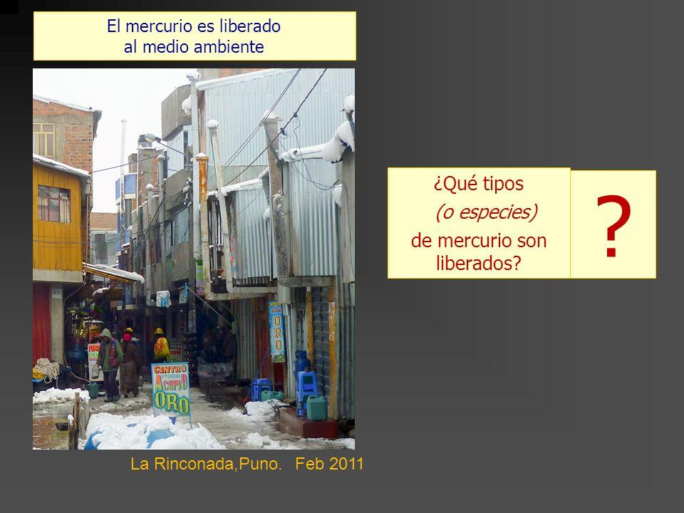 El mercurio es liberado al medio ambiente ¿Qué tipos (o especies) de mercurio son liberados? La Rinconada,Puno. Feb 2011 ?