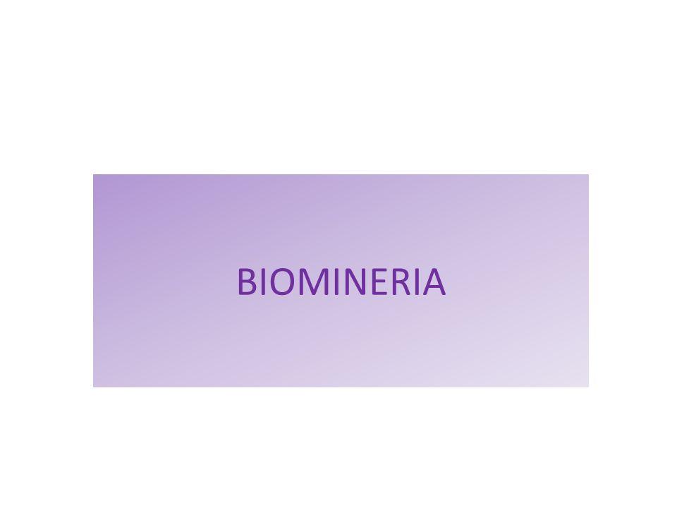 El término biominería.
