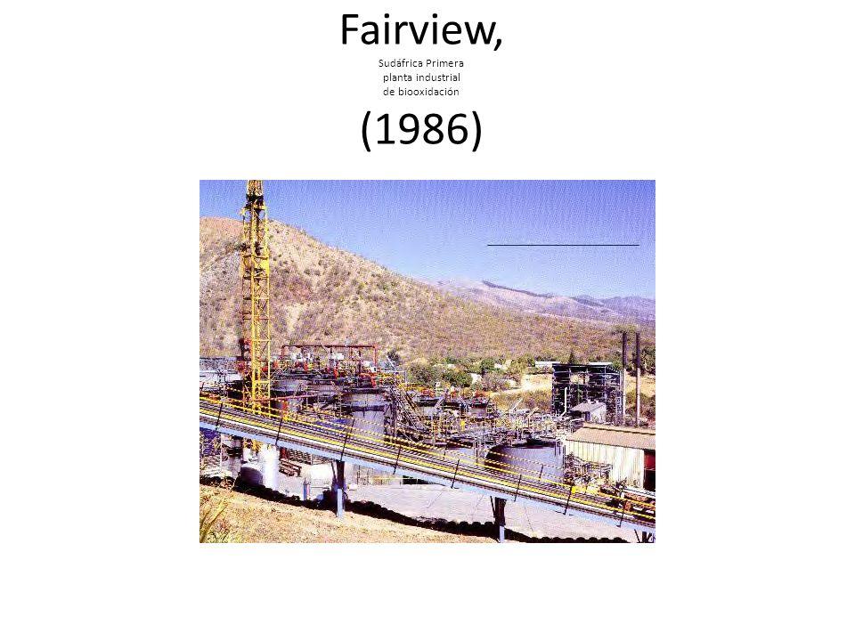 Fairview, Sudáfrica Primera planta industrial de biooxidación (1986)
