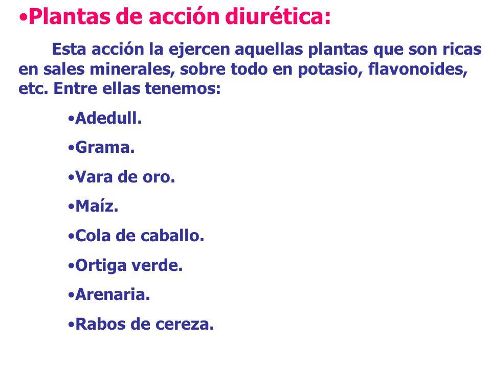 Diente de Leon