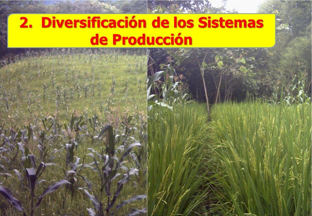2. Diversificación de los Sistemas de Producción