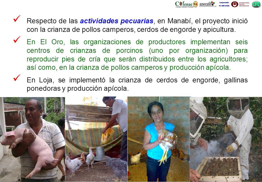 Respecto de las actividades pecuarias, en Manabí, el proyecto inició con la crianza de pollos camperos, cerdos de engorde y apicultura. En El Oro, las
