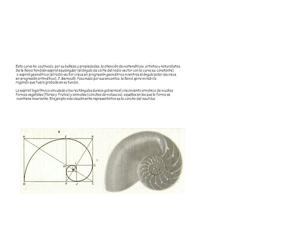 Esta curva ha cautivado, por su belleza y propiedades, la atención de matemáticos, artistas y naturalistas. Se le llama también espiral equiangular (e