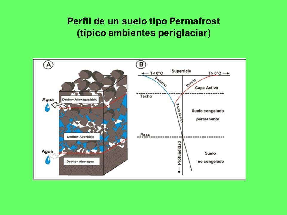 Perfil de un suelo tipo Permafrost (típico ambientes periglaciar)