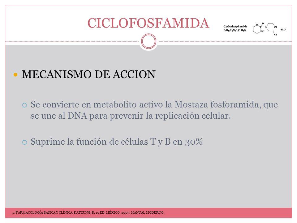 CICLOFOSFAMIDA INDICACIONES Artritis reumatoide 2mg/kg/día Granulomatosis de Wegener Vasculitis LES EECTOS SECUNDARIOS Infertilidad Supresión de Médula ósea Alopecia Cistitis hemorrágica Raro- Carcinoma de vejiga THERAPEUTIC STRATEGIES FOR RHEUMATOID ARTHRITIS.