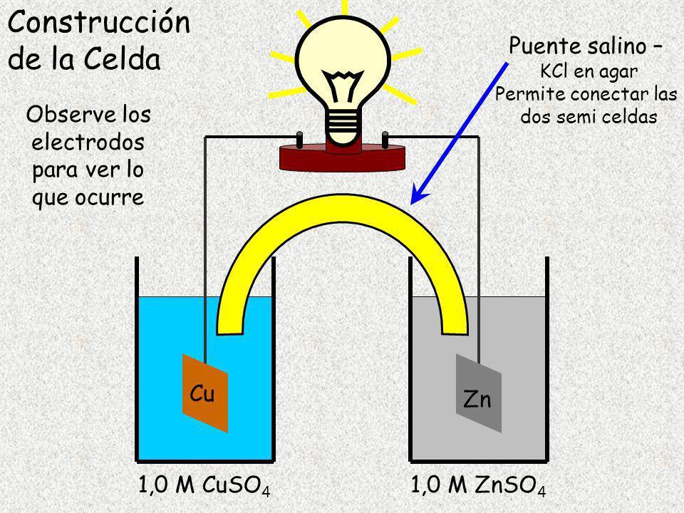 Cu 1,0 M CuSO 4 Zn 1,0 M ZnSO 4 Puente salino – KCl en agar Permite conectar las dos semi celdas Construcción de la Celda Observe los electrodos para