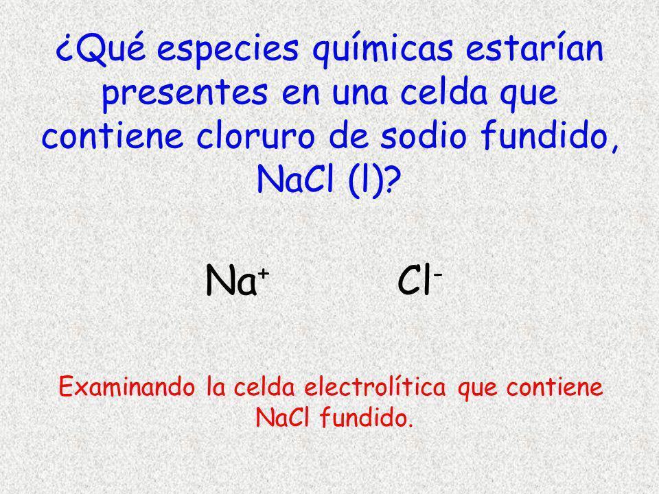 ¿Qué especies químicas estarían presentes en una celda que contiene cloruro de sodio fundido, NaCl (l)? Na + Cl - Examinando la celda electrolítica qu