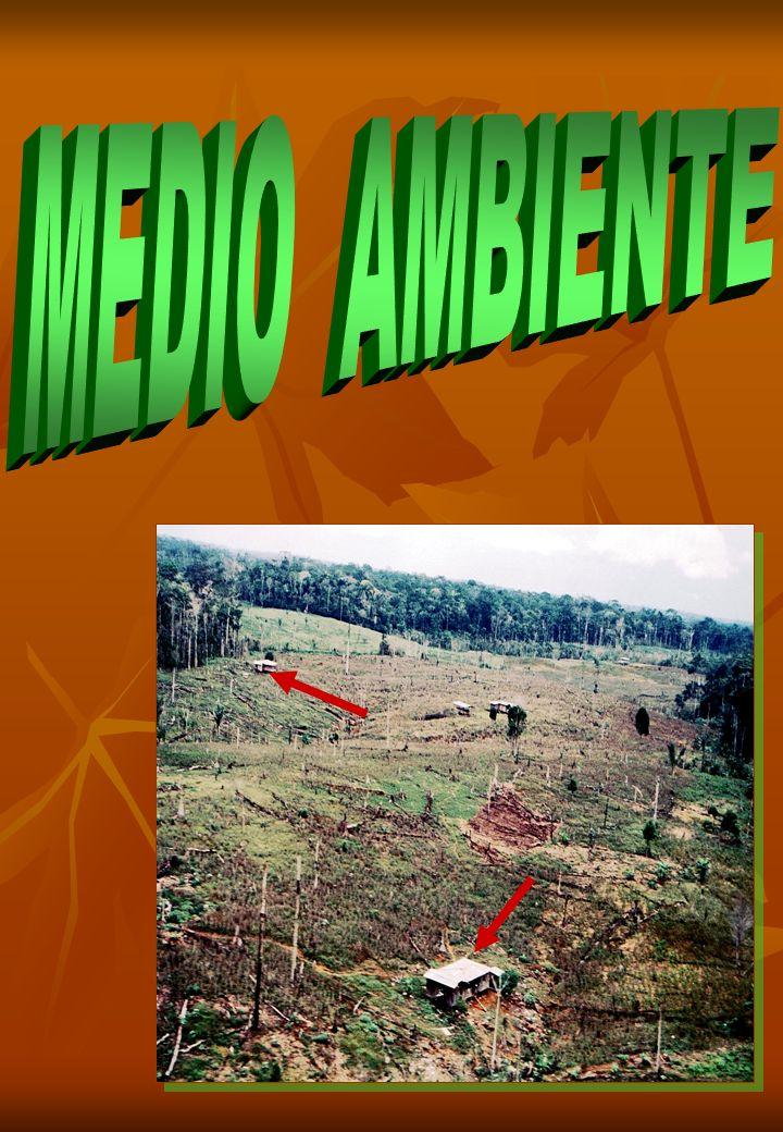 DEFORESTACION COLOMBIA PERDIO 1.400.000 ha. DE BOSQUE EN LOS ULTIMOS 10 AÑOS