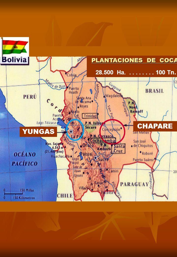 YUNGAS CHAPARE PLANTACIONES DE COCA 28.500 Ha......... 100 Tn.