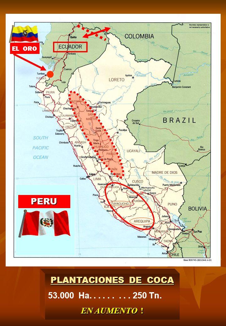 PLANTACIONES DE COCA 53.000 Ha......... 250 Tn. EN AUMENTO ! EL ORO PERU