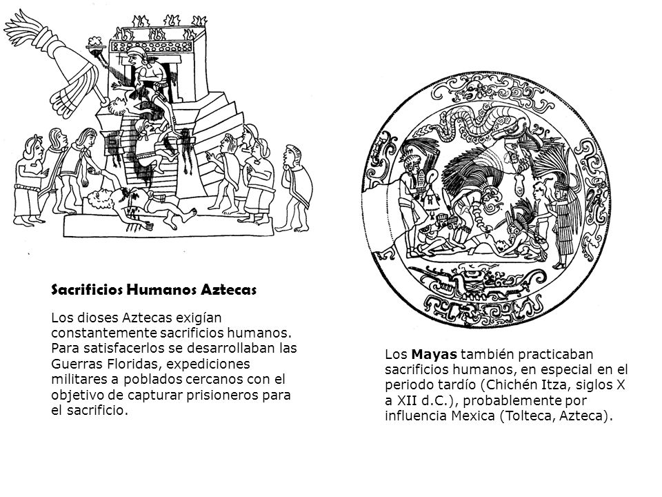 Sacrificios Humanos Aztecas Los dioses Aztecas exigían constantemente sacrificios humanos. Para satisfacerlos se desarrollaban las Guerras Floridas, e