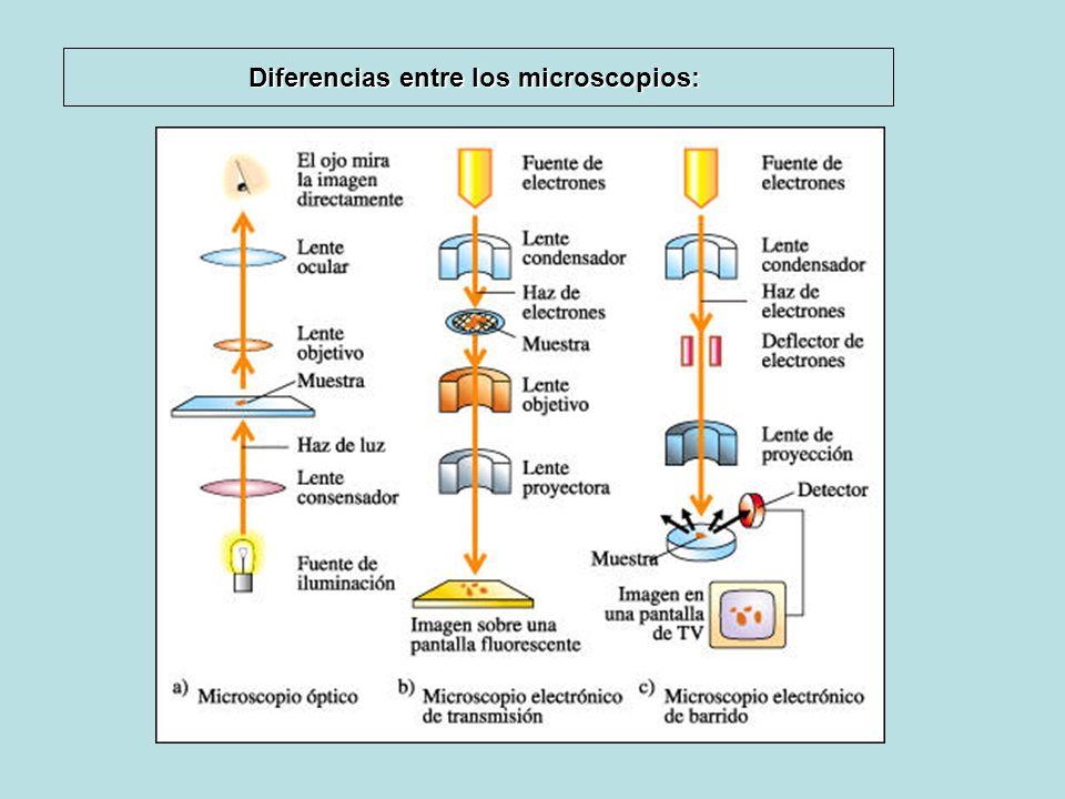 Diferencias entre los microscopios: