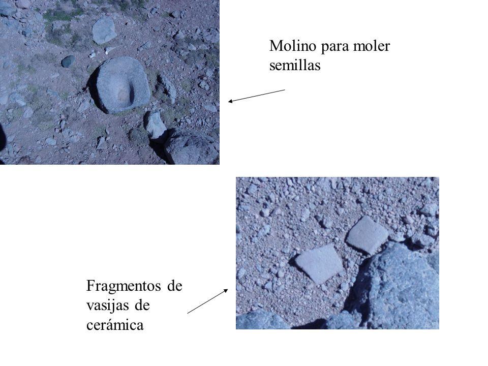 Molino para moler semillas Fragmentos de vasijas de cerámica