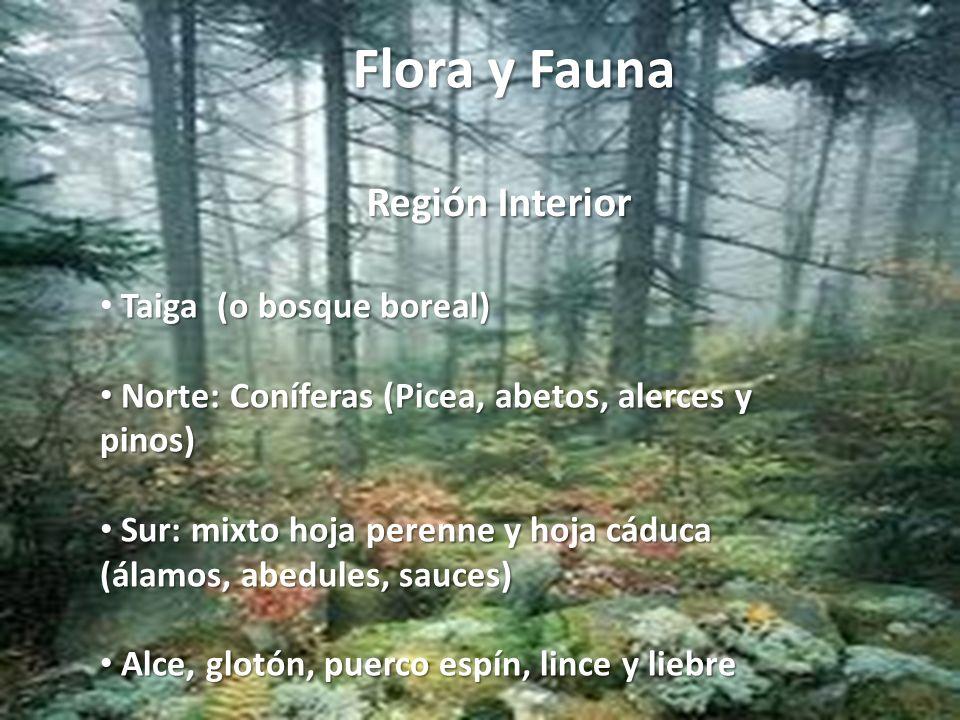 Flora y Fauna Región Interior Taiga (o bosque boreal) Norte: Coníferas (Picea, abetos, alerces y pinos) Norte: Coníferas (Picea, abetos, alerces y pin