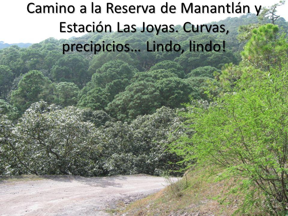 Camino a la Reserva de Manantlán y Estación Las Joyas. Curvas, precipicios… Lindo, lindo!